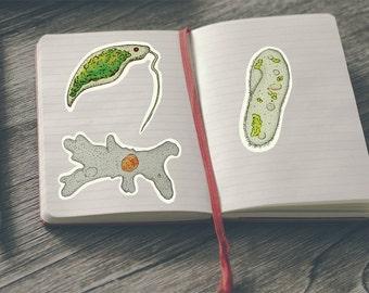 Biology stickers set of 3 Protists-Science stickers/ Zoology Stickers / science gifts,biology gifts - Euglena,Paramecium,Amoeba Sticker Pack