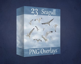 23 Flying Seagull PNG Digital Overlays