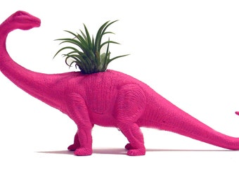 NEW! Air Plant Dinosaur Planters WITH Air Plants!