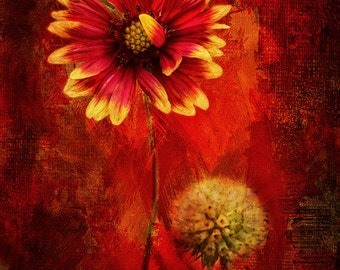 Floral Photography, Flower Photo, Red Flower Photo, Digital Flower Painting, Shades of Red, Red Photography, Red Fine Art Photography