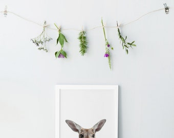Kangaroo print - Nursery animal print - Nursery decor - Nursery animals - Kangaroo art print - Nursery animals prints- Nursery animals print