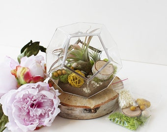 Geometric Air Plant Terrarium DIY KIT