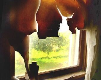 Window, Shade of browns, vintage