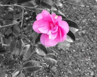 Pink Flower-Digital Download