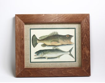 Vintage Fish Lithograph Print Framed Matted
