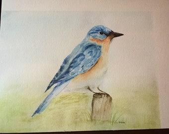 North American Blue Bird No.1