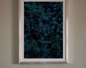 Modern Blue Tree Print,Photography Wall Art,Plant Photo,Blue Leaves,Landscape,Printable Large Poster,Dark Green Leaves,Instant Download