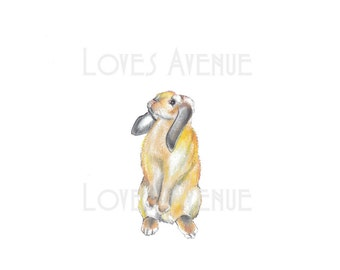 Lop eared bunny rabbit Giclee print - drawing illustration