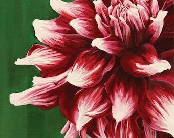 Dahlia Closeup Spring - Red, Pink, Fuchsia, White