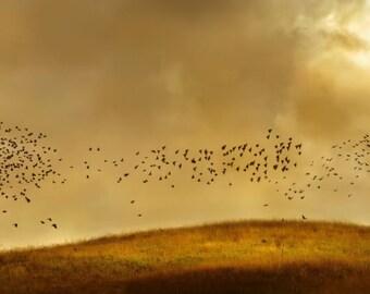Flocking Birds, Autumn, rolling hills, sky, grass, field, birds