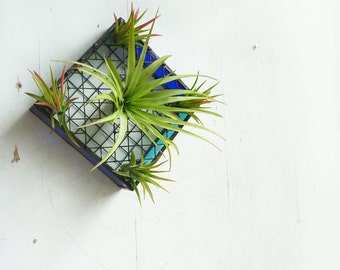 Stained Glass and Wire Tray for Air Plants - Royal blue and Aqua