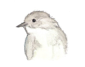 Phoebe Bird - archival print of watercolour painting, grey