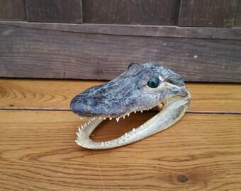 Vintage Taxidermy Preserved Alligator Head