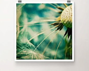 Helicopter Landing Platform - FineArtPrint Dandelion Flower Floral Photography Macro Seed