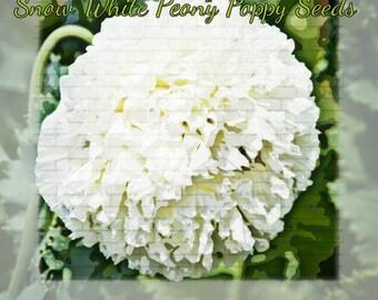 Snow White Peony Poppy Flower Seeds