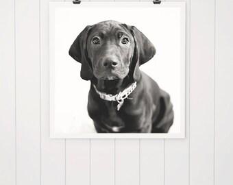 Black dog print, puppy photo, dog photography dog print, dog picture, black dog art, puppy art, home decor, fine art photography, rescue dog