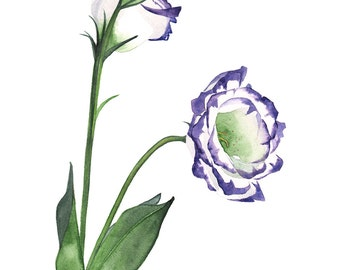 Lisianthus watercolour painting print, A3 size, L9416, contemporary wall art, flower print, Lisianthus print, Lisianthus watercolor painting