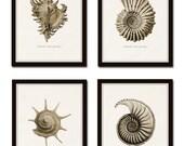Sepia Seashell Print Set No. 5, Ernst Haeckel, Giclee, Canvas Art, Wall Art, Prints and Posters, Coastal Art, Nautical Art, Illustration