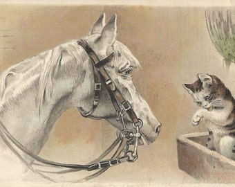 Grey and Tabby - Antique 1900s Unsigned Horse and Cat Chromolith Postcard, Undivided Back