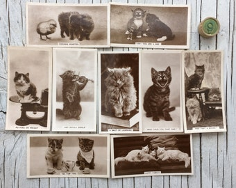 Original vintage Animal Studies cigarette cards, a part set of 9 cat and kittens. 1930s. Photographic cards.