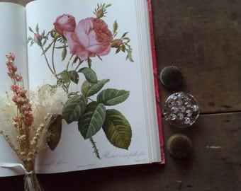 Vintage Book Redoute's Roses Book Plates Art Paintings Botanical Nature  Coffee Table Book Reference Flowers Shabby Cottage Chic Gardening