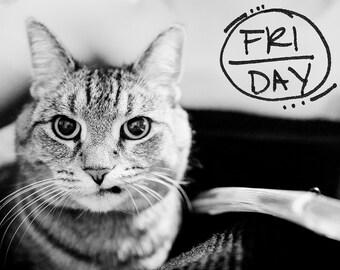 CIRCLED DAYS. (Scrapbooking Digital Download - Photoshop Brush Stamps - Handwritten Days of the Week in Circles)