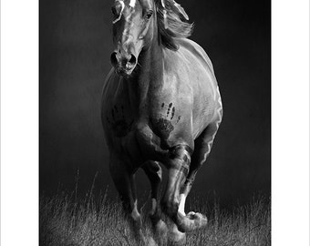Black and white fine art print of Sioux War Pony-1