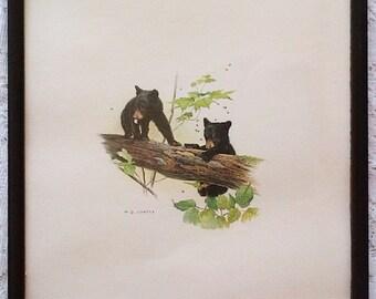 1977 M.G. Loates Black Bear Cubs K10005 Framed Art Print - 11 X 13