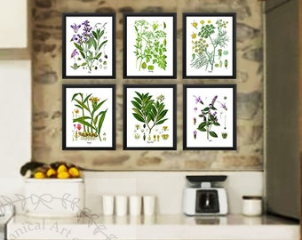 Kitchen Herb Botanical Prints Set of 6 Kitchen Herbs Wall Art Parsley Fennel Bay Leaf Mint Parsley Sage Herb kitchen decor gifts for Mom