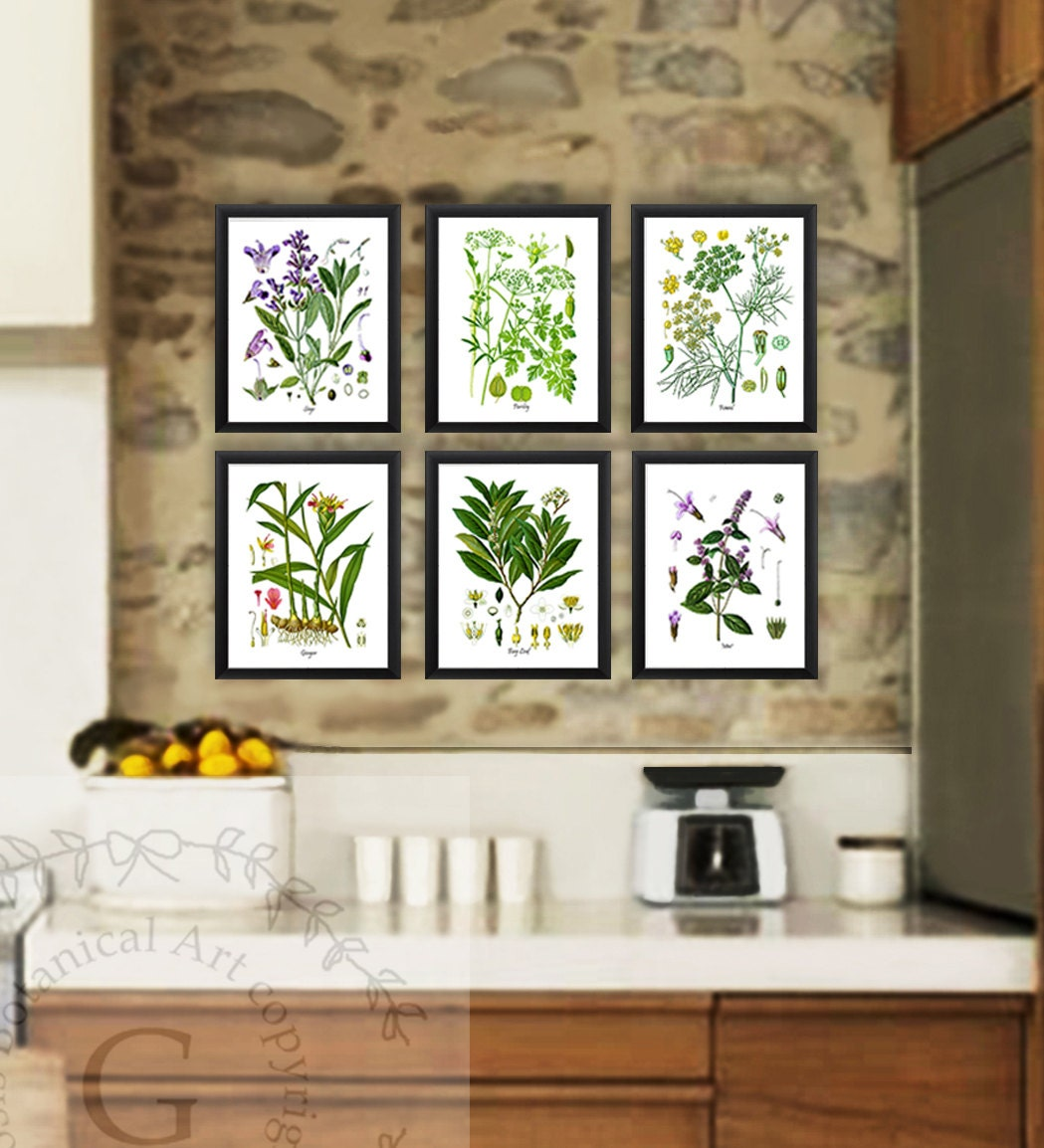 Kitchen Herbs: Kitchen Herb Botanical Prints Set Of 6 Kitchen Herbs Wall Art