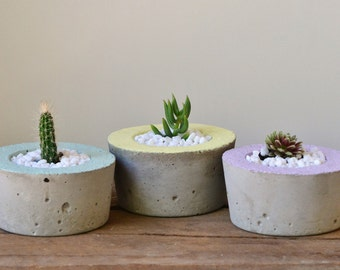 Small Concrete Planters with Pastel Trim