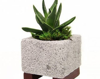 Lava Rock Planter with Live Plant - 4 x 4 x 4.5in