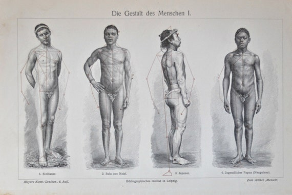 Human anatomy Men and women shapes.  Old book plate, 1904. Antique illustration. 111 years lithograph. 9'6 x 11'7 inches.