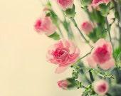 Pink carnation flowers, Floral print, flower photography, carnation still life fine art photography, romantic decor, home decor, wall decor