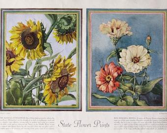 1938 State Flower Prints - Kansas Sunflower - Indiana Zinnia - Vintage 1930s Watercolor Botanical Print