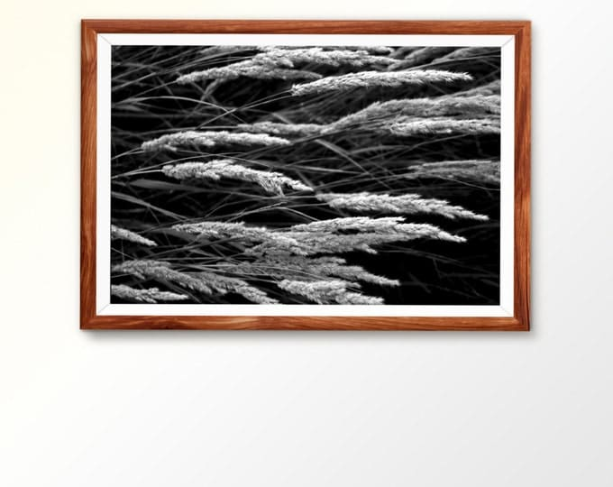 Digital photo Instant download Digital download Living Room Decor Dry Plants Photo Botanical Photo Print Nature Photo Nature photography