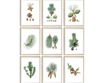 Pinecone Art Print SET of 9. botanical art prints, botanical pinecone prints, botanical pinecone art, pine illustration, spa, living room