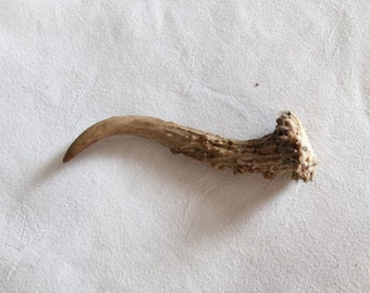 Full Single Point Deer Antler, Naturally shed