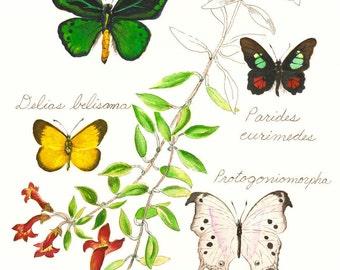 Butterflies group