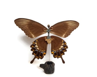 Larger Swallowtail Fairy! Perfect for a Collector of the Strange and Unusual! Dead Fairy Taxidermy Sideshow Gaff Curiosities and Oddities