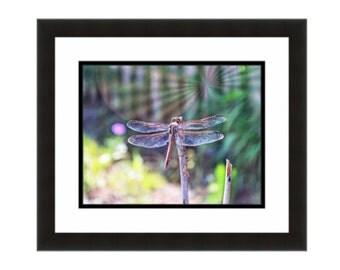 Dragonfly wall art etsy for Koi larousse