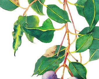 8x10 print: Gum tree branch with gumnuts - botanical wall art decor - Australian flora gift - botanical watercolor print - living room decor