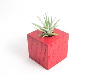 Air Plant + Wood Air Plant Planter / Holder / Terrarium + Mini Air Plant - Distressed Red / Plant Home Decor / Hostess Gift