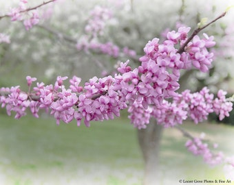 Flowering Trees, Spring Blossoms, Redbud Tree, Nature Photography, Pink Art Print, Redbud In Spring