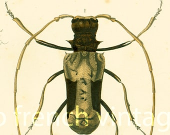 1861 Longhorn Beetles, Insects antique print, original hand colored engraving, natural history, entomology wall art, gift for insect lover