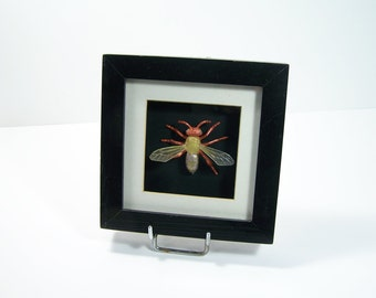 Cabinet of curiosity - Insect frame - Imitation of insect for facetious entomologist