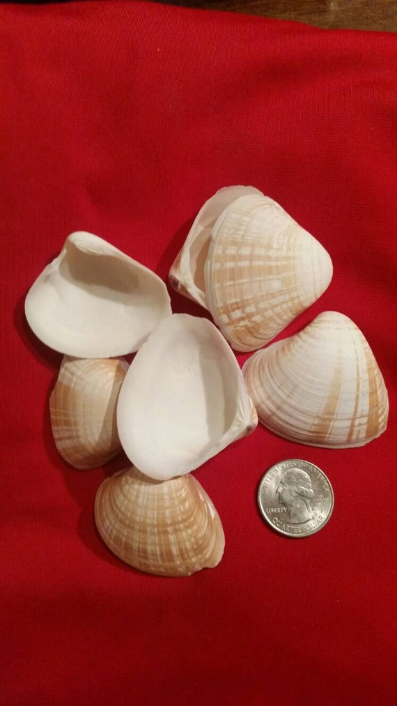 Arts And Crafts With Clam Shells