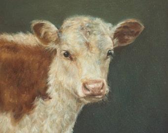 Hereford Calf Greetings Card