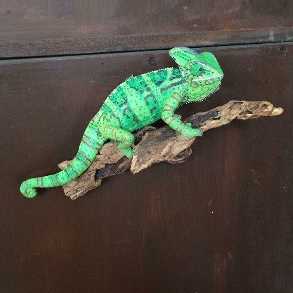 Veiled Female Chameleon Lifesize Sculpture