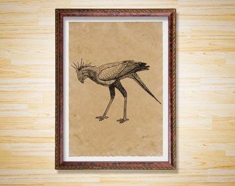 Vintage decor Secretary bird print Animal poster